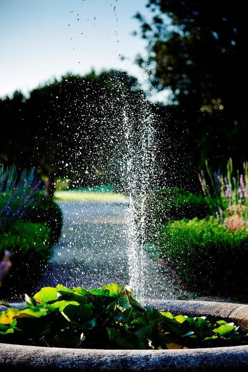 fontaine bassin plante dans jardin a la française
